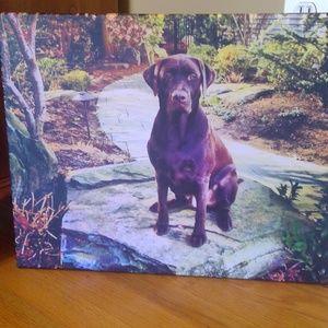 Chocolate Labrador Canvas